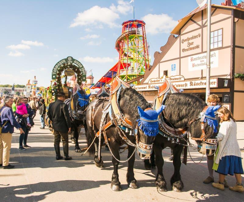 Лошади Haflinger вытягивая бочонки пива на Oktoberfest стоковые фотографии rf