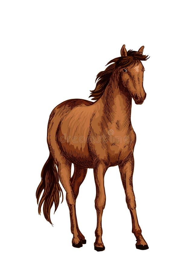 Лошадь аравийского эскиза породы с коричневой конематкой бесплатная иллюстрация