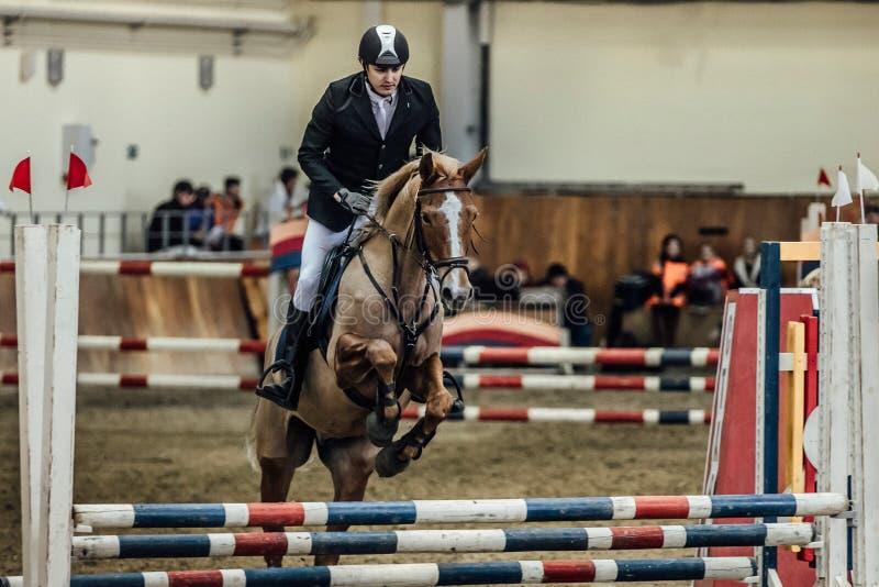 Лошадь всадника спортсмена человека преодолевает комплекс спорт препятствий внутри помещения стоковые фотографии rf