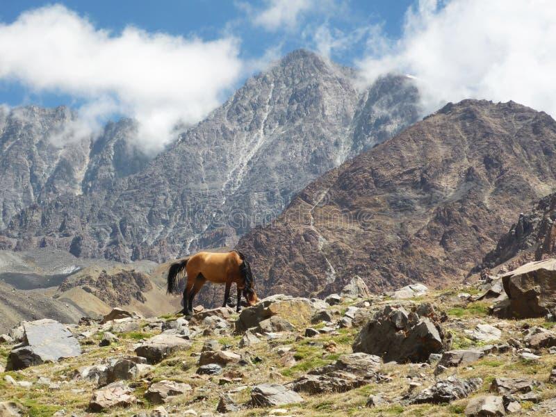 Лошадь в аргентинке Андах стоковое изображение