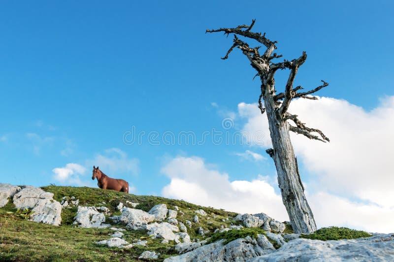 Лошадь в верхней горе стоковые изображения rf