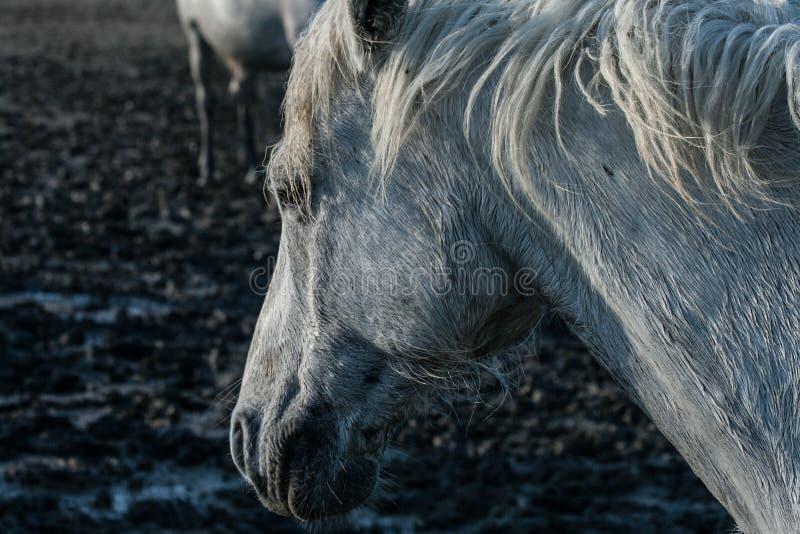 Лошадь в грязи болота стоковая фотография