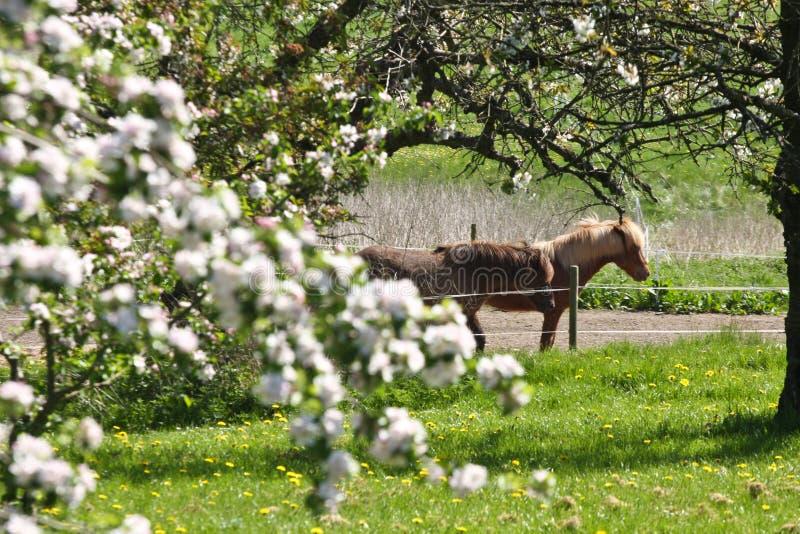 Лошадь в лете стоковое изображение