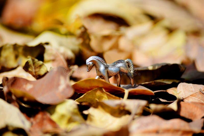 Лошадь в листьях осени стоковое изображение rf