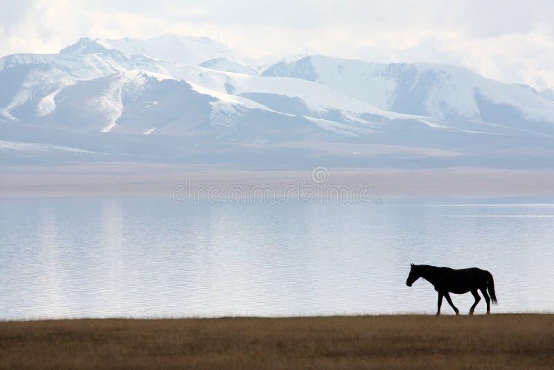 Лошадь в озере песн-Kul стоковые фотографии rf