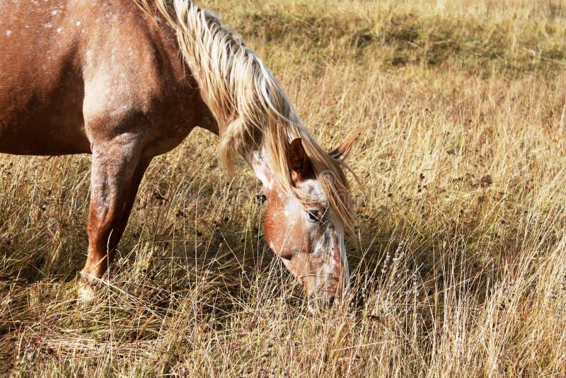 Лошадь в осени стоковые фотографии rf