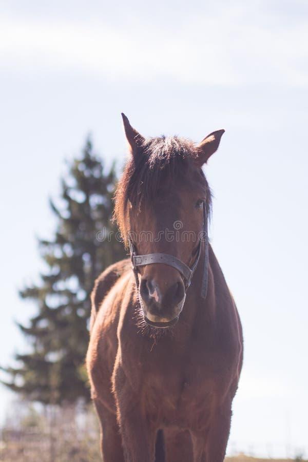 Лошадь в одичалой природе стоковые фотографии rf