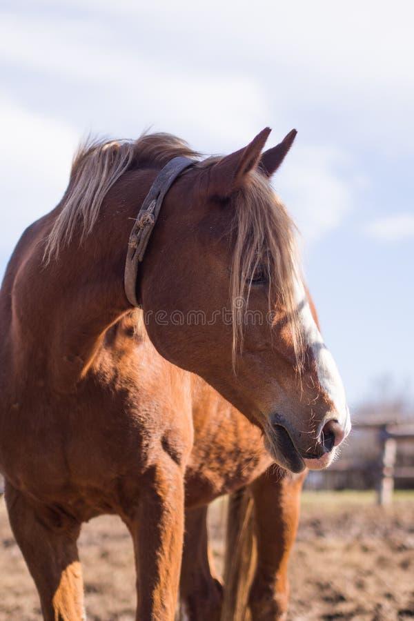 Лошадь в одичалой природе стоковое изображение rf