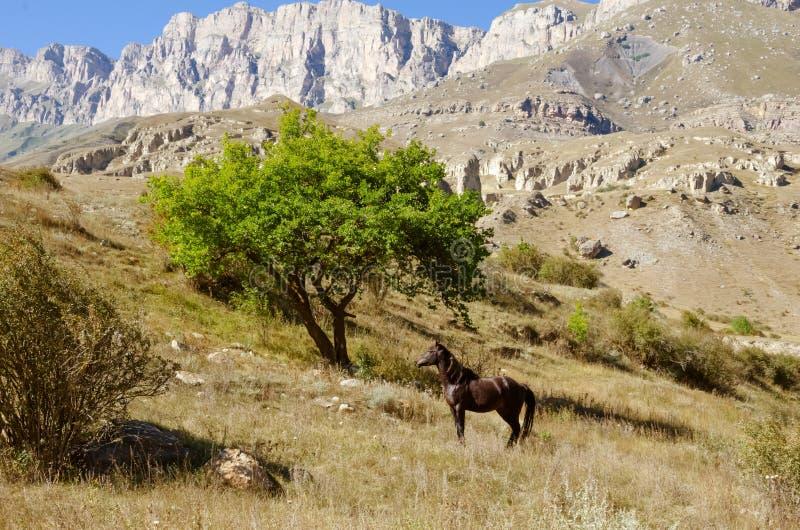 Лошадь в одичалых горах на заднем плане стоковые изображения