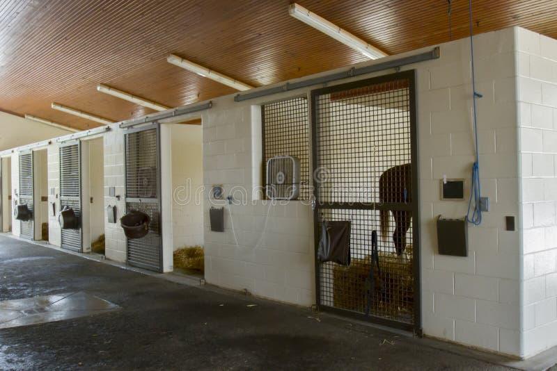 Лошадь в стойле equine больницы стоковое фото rf