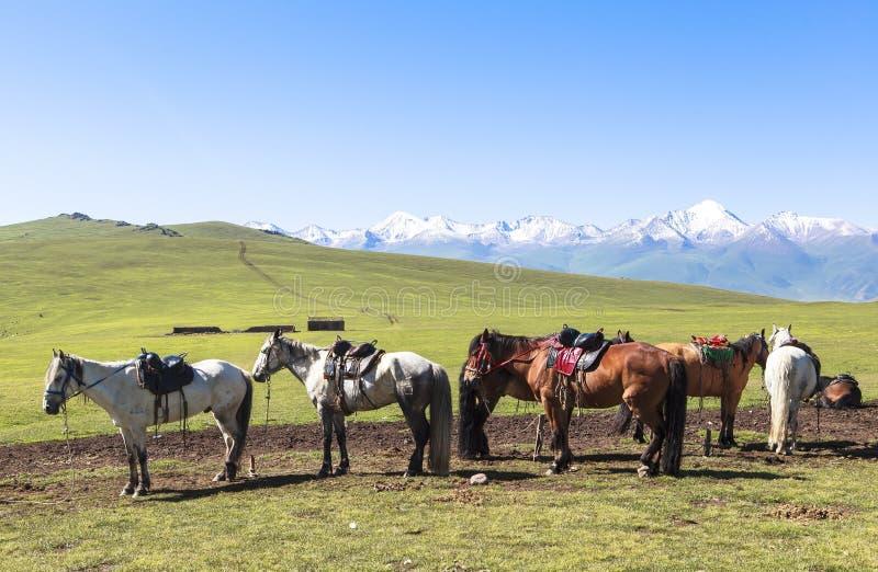 Лошадь в луге Синьцзян, Китае стоковое изображение rf