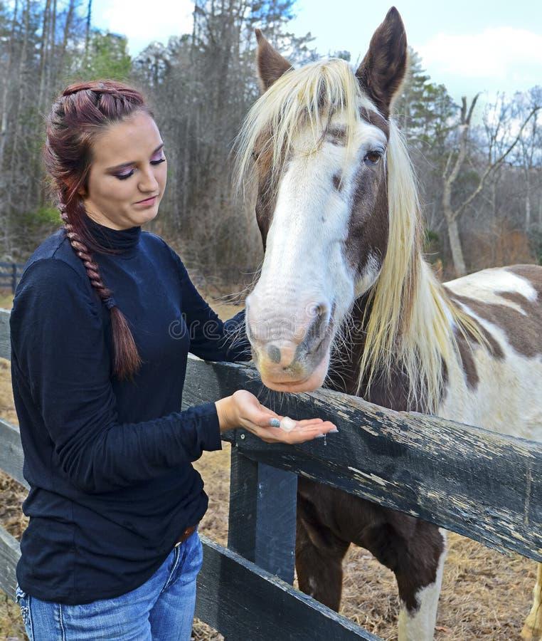 Лошадь девушки предлагая обслуживание стоковое фото rf
