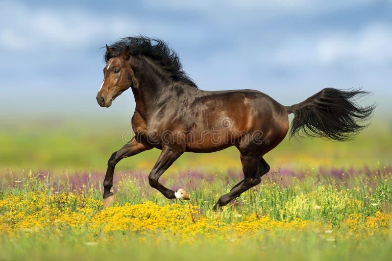Лошадь залива, который побежали в цветках стоковое изображение