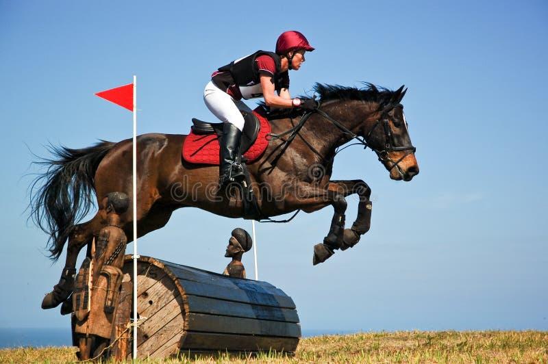 Лошадь залива протягивая над скачкой бочонка на выставке лошади стоковые изображения rf