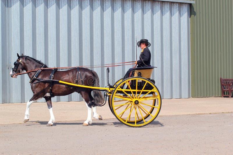 Лошадь и двуколка или пони и ловушка. стоковые изображения