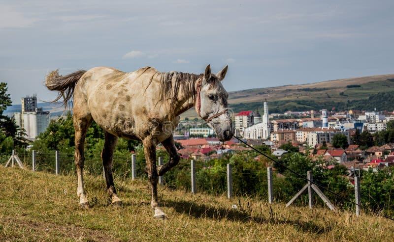 Лошадь и город стоковая фотография rf