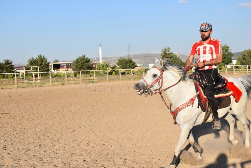 Лошадь и жокей стоковая фотография rf