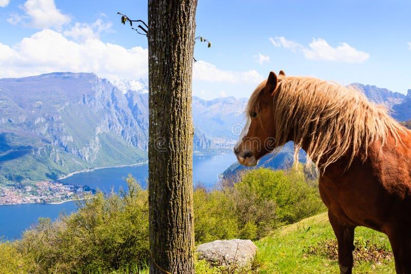 Лошадь и озеро стоковое изображение