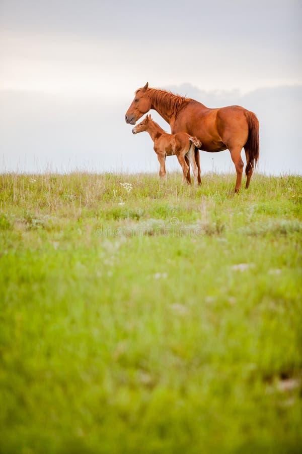 Лошадь и осленок стоковые фото