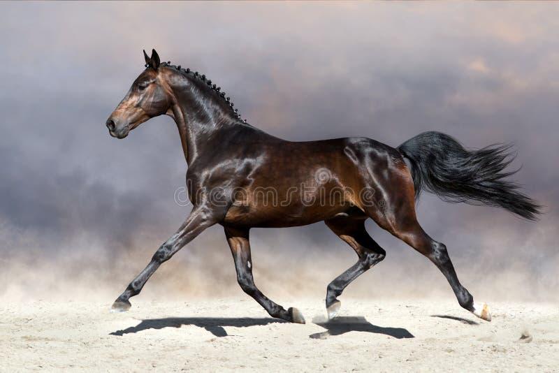 Лошадь идя рысью в пустыне стоковые фотографии rf