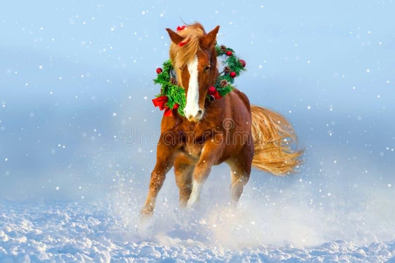 Лошадь, который побежали в снеге изображение рождества предпосылки над красной белизной santa стоковые фотографии rf