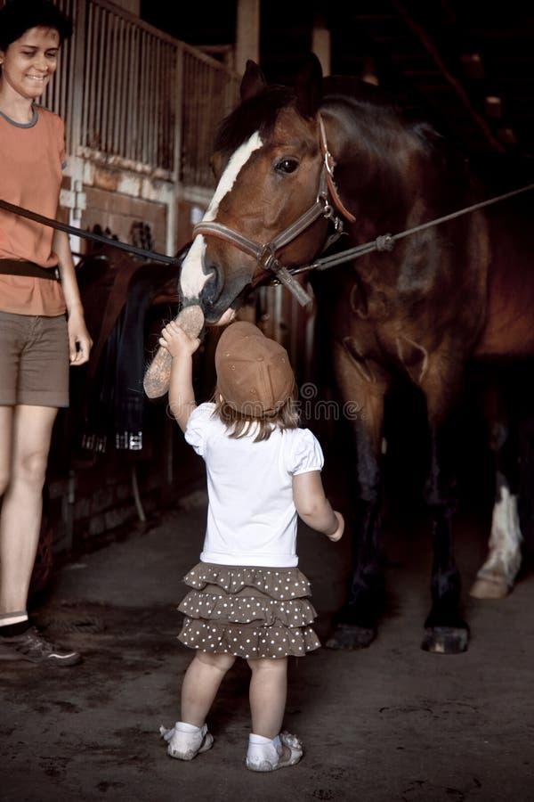 Лошадь маленькой девочки чистя щеткой стоковое фото rf