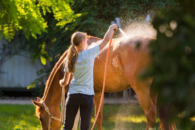 Лошадь наслаждаясь ливнем стоковая фотография rf