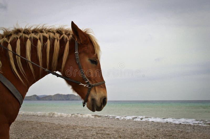 Лошадь на пляже стоковое фото rf