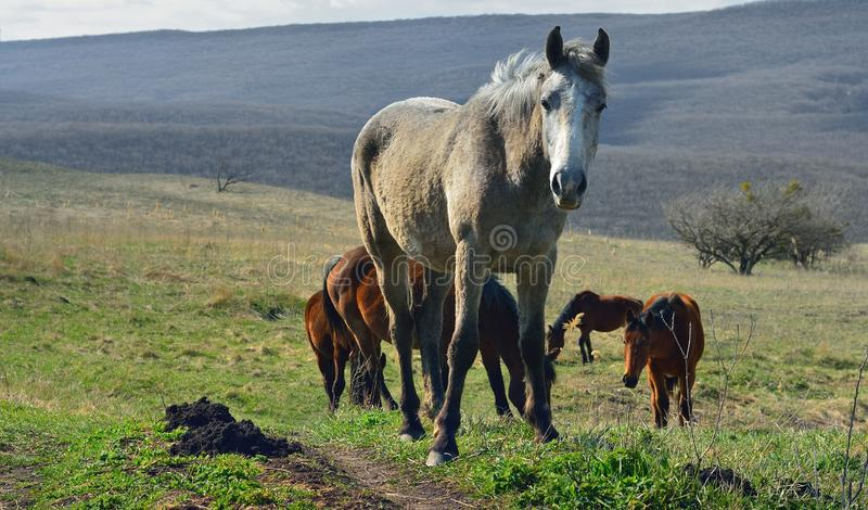 Лошадь на луге стоковое фото rf