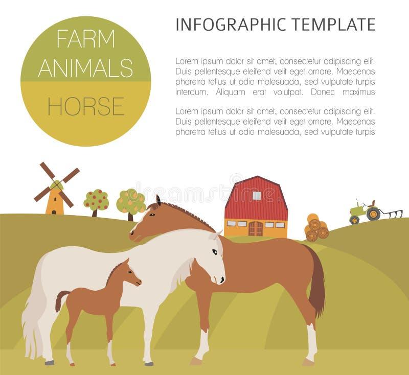 Лошадь обрабатывая землю infographic шаблон Жеребец, конематка, семья осленка иллюстрация штока