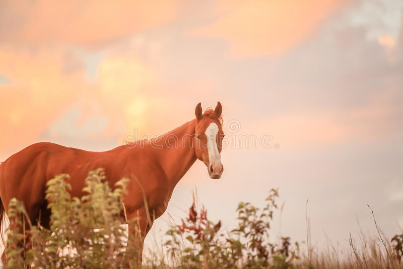 Лошадь одногодки квартальная стоковые фотографии rf