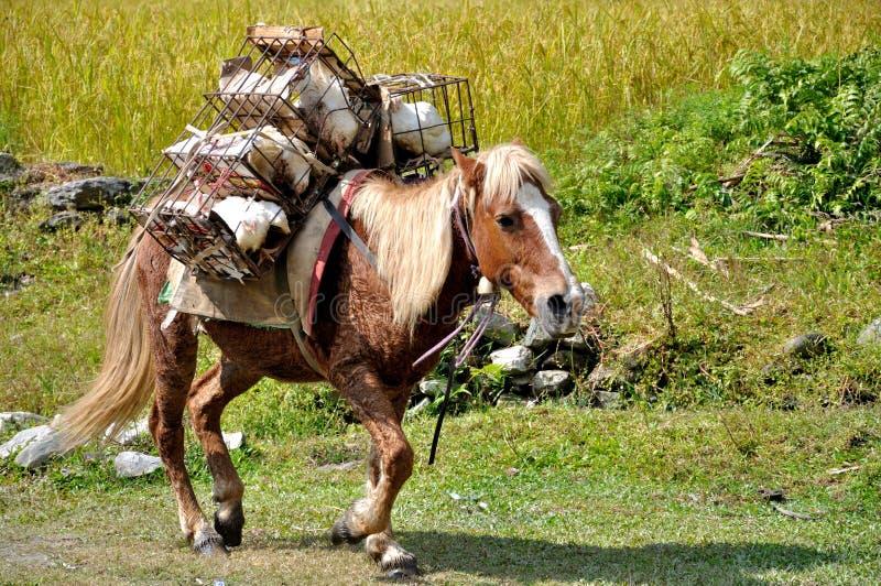Лошадь пакета в Гималаях стоковая фотография rf