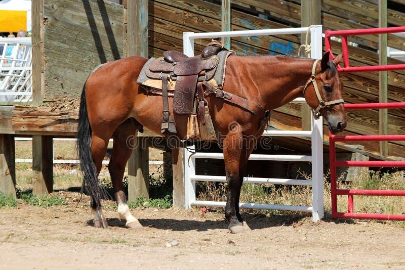 Лошадь родео стоковое изображение rf