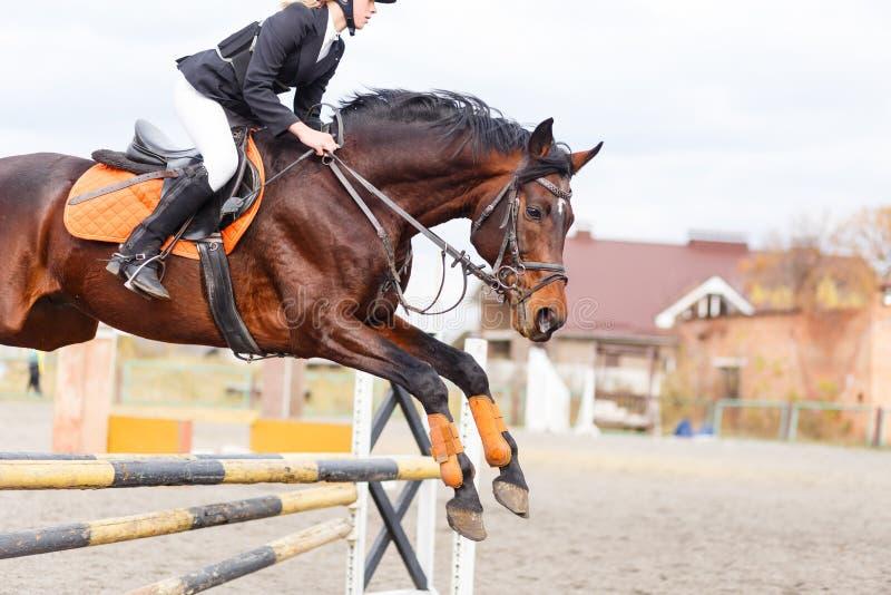 Лошадь с всадником скачет над барьером на скакать выставки стоковая фотография