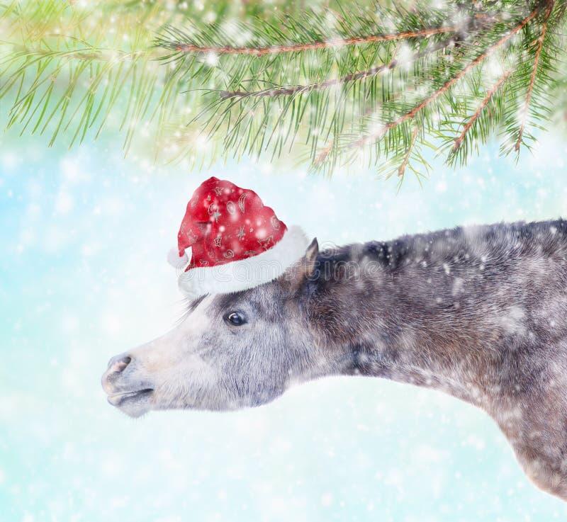 Лошадь с длинной шеей в шляпе santa под спрусом разветвляет в снеге стоковая фотография