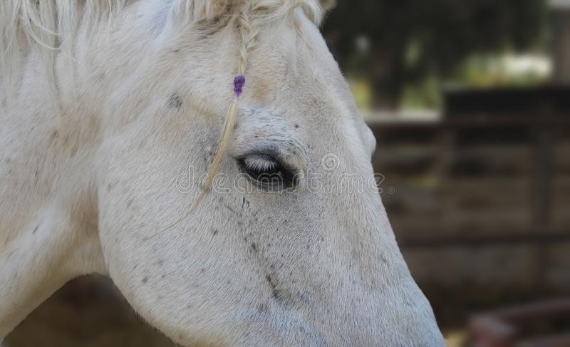 Лошадь с оплеткой стоковые фото