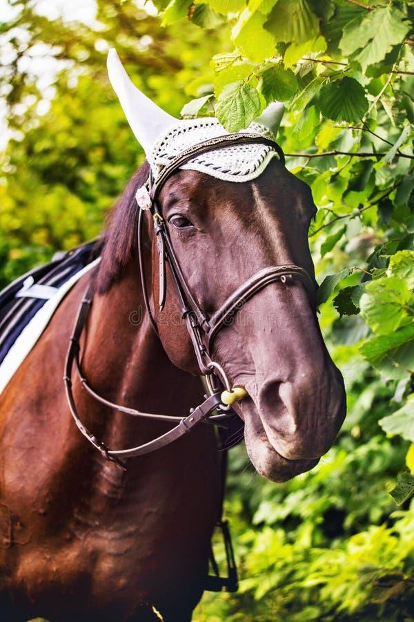 Лошадь с славным портретом уздечки стоковое изображение