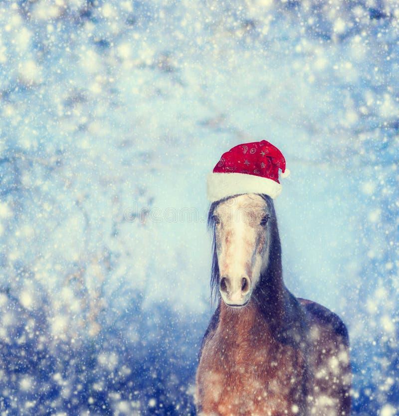 Лошадь с шляпой Санты на предпосылке рождества снежинок зимы стоковое изображение rf