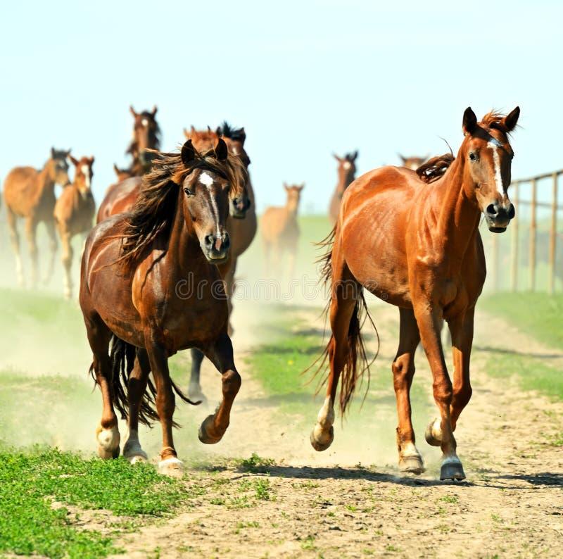 Download Лошадь стоковое изображение. изображение насчитывающей ангстрома - 40579679