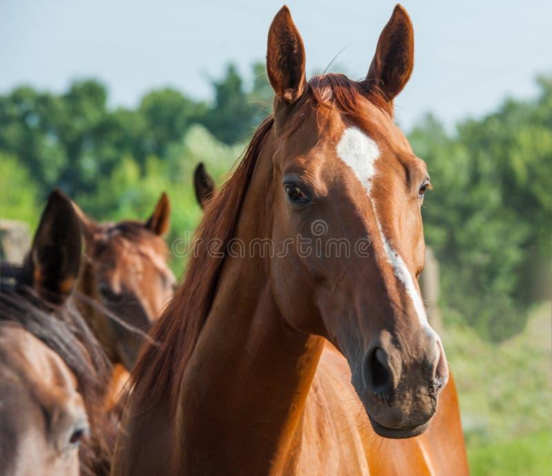 Download Лошадь стоковое изображение. изображение насчитывающей brougham - 40590501