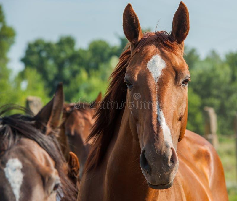 Download Лошадь стоковое изображение. изображение насчитывающей никто - 40590521