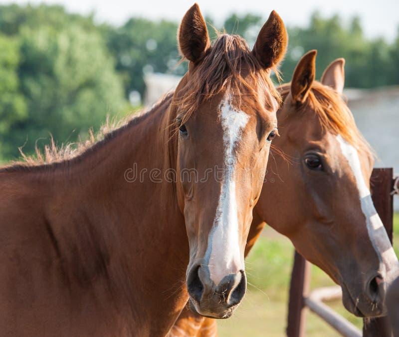 Download Лошадь стоковое изображение. изображение насчитывающей посмотрите - 40590643