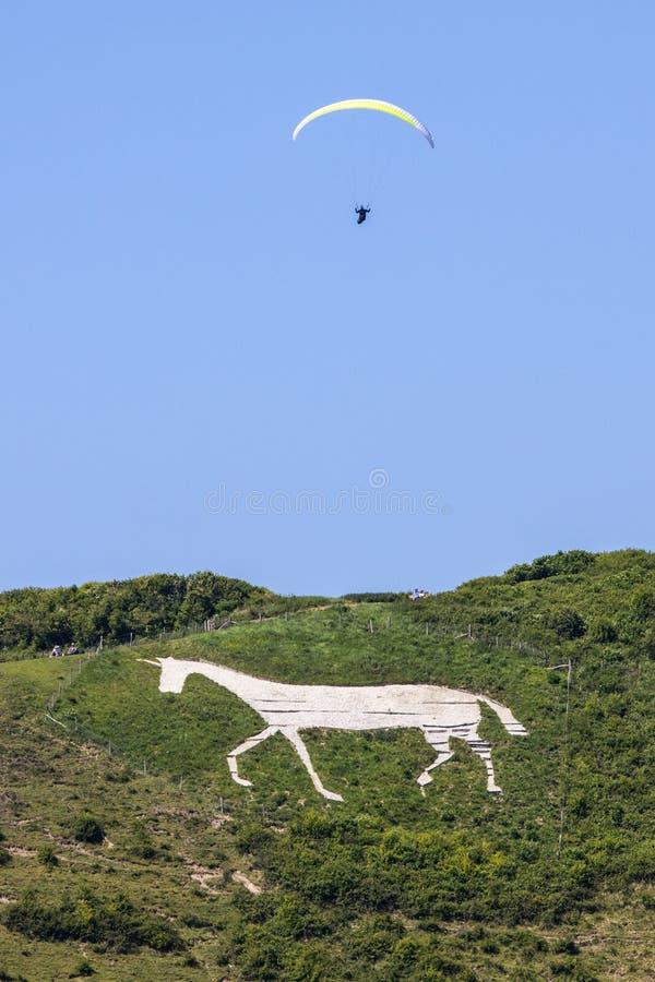 Лошадь Litlington белая стоковое изображение rf