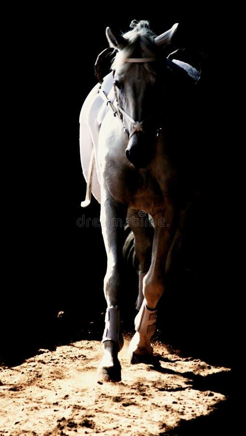 Лошадь Voltige стоковое фото rf