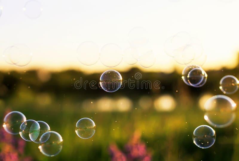 Луга зеленого цвета лета трава ясного зеленая и цветки и пузыри мыла ярко shimmer и светят в воздухе на заходе солнца стоковое фото