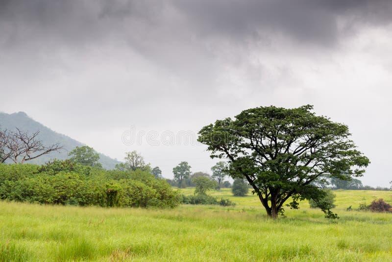 Луга и деревья в дождевом лесе стоковые изображения rf