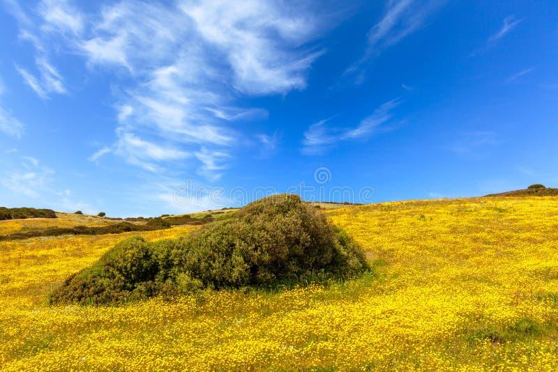 Луга к весеннее время в Сардинии стоковая фотография rf