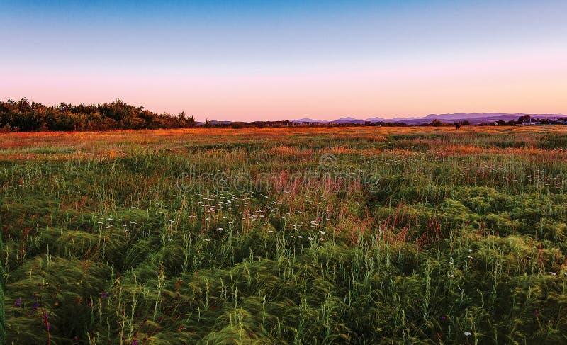 Луга ландшафта с высокой травой в предгорьях северного Кавказ, красиво осветили заходящее солнце лета мягкое стоковое изображение rf