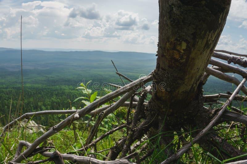 Луга Taganay естественного ландшафта высокогорные стоковое изображение