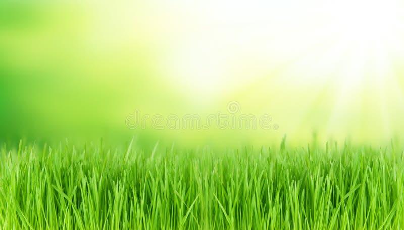 Download Луг весны стоковое фото. изображение насчитывающей трава - 37931074